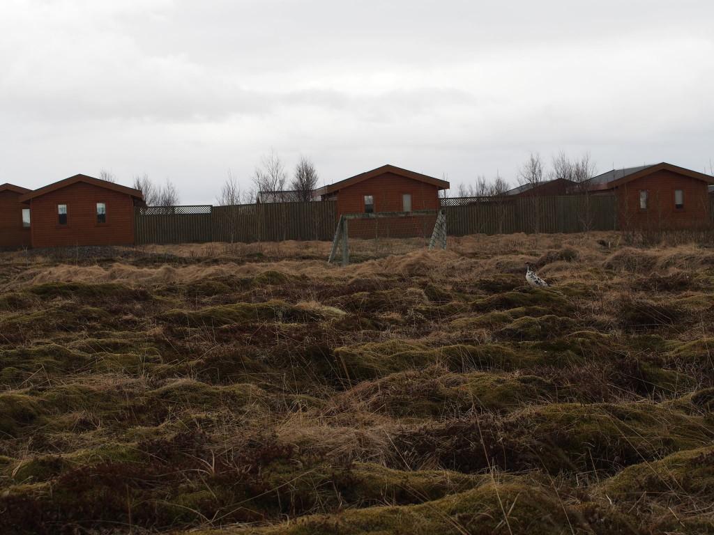 De lokale rypene har også fått med seg ryktene om kjekke herremenn i hyttelandsbyen, og strømmer til