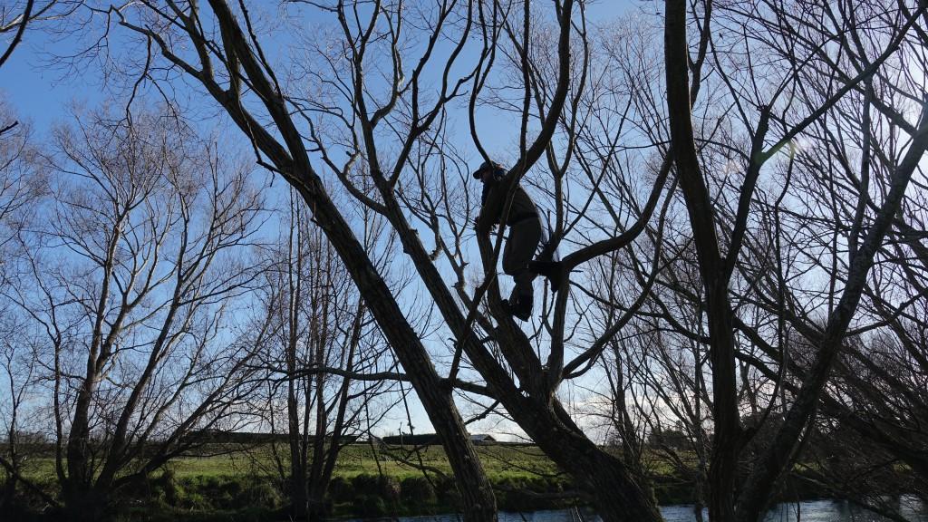 Spotting fra trær er morro.